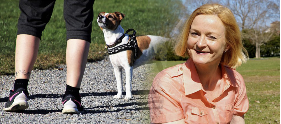 Foster carers diary a pet dog story
