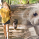 Foster care and pets