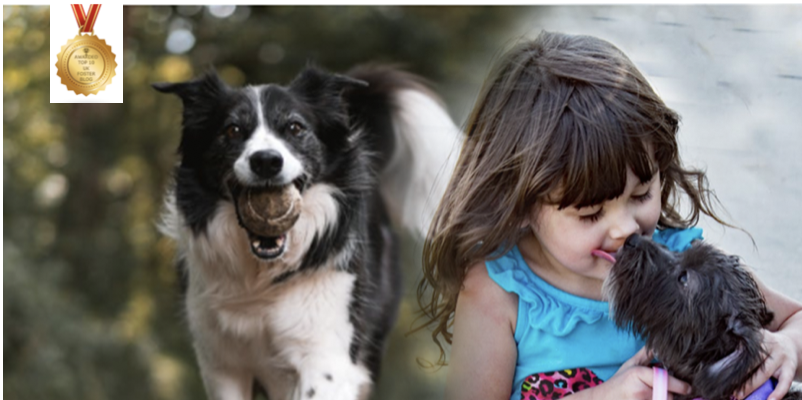 Foster carers the benefits of pets